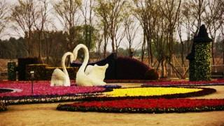 欢歌三月三赏花会 成都国际非遗博览园赏花行