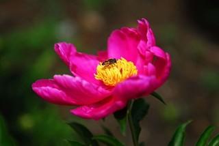 春色来袭 吉林赏花全攻略