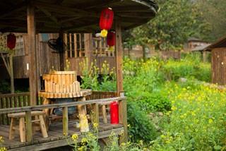 住树屋赏油菜花 在英德天门沟的闲暇时光