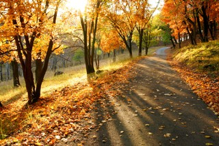 私享欧式秋景 平山神鹿一日游