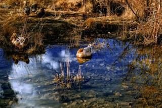 我在云南过春节 女儿王国摩梭走婚文化泸沽湖两日游