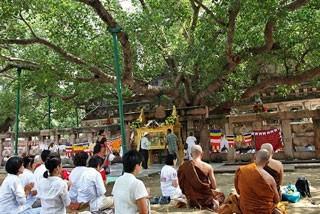 追寻佛陀的足迹印度佛教朝圣之旅