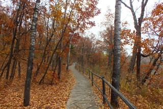 感受林都魅力 享受五花山景 伊春秋季两日游