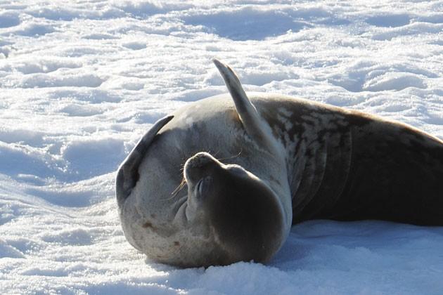动物 海洋动物 鲸鱼