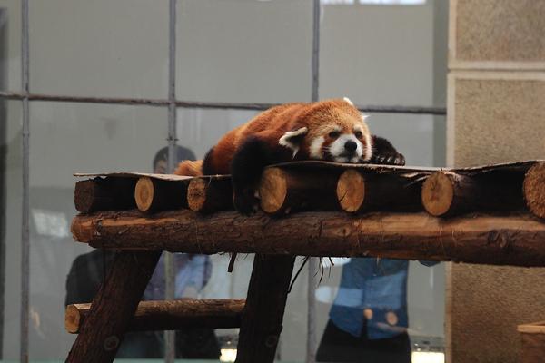 萌物大世界 天津动物园游园记