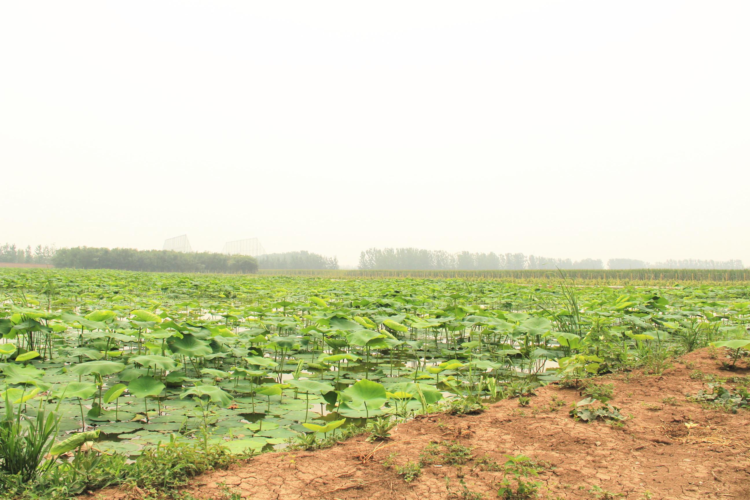 津城里的世外桃源——双街农业采摘游