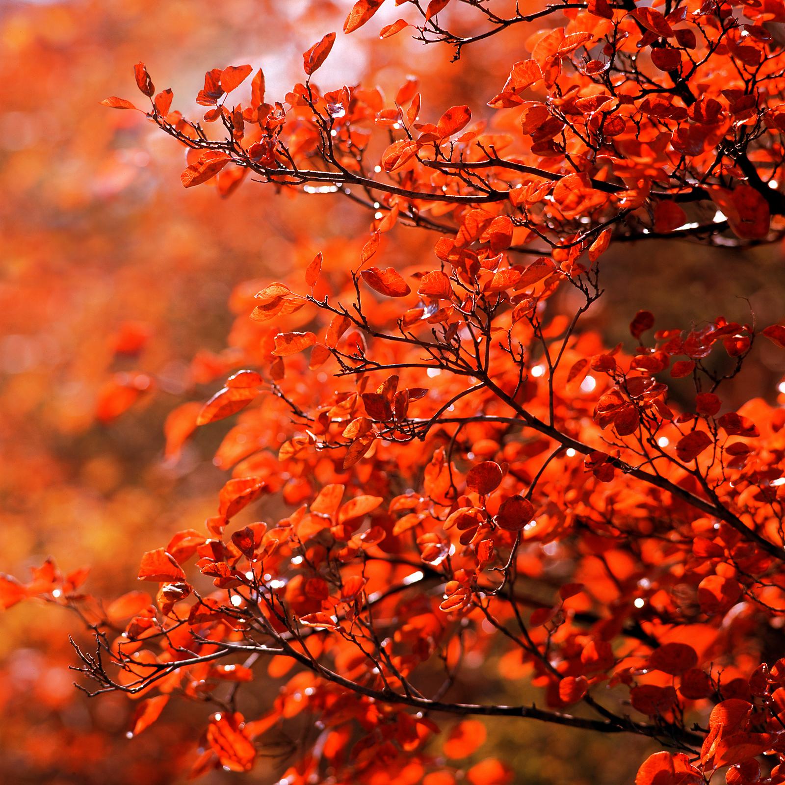 关于秋天树叶的诗句