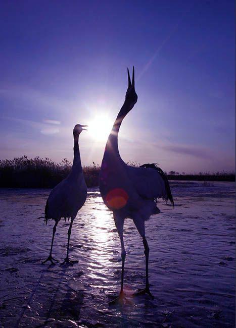 其中包括11种国家一级保护动物和67种国家二级保护
