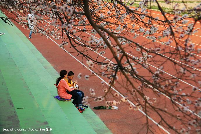 春季来赏花景点住宿攻略_哈尔滨攻略\攻略\线威海赏花冰城可带宠物图片