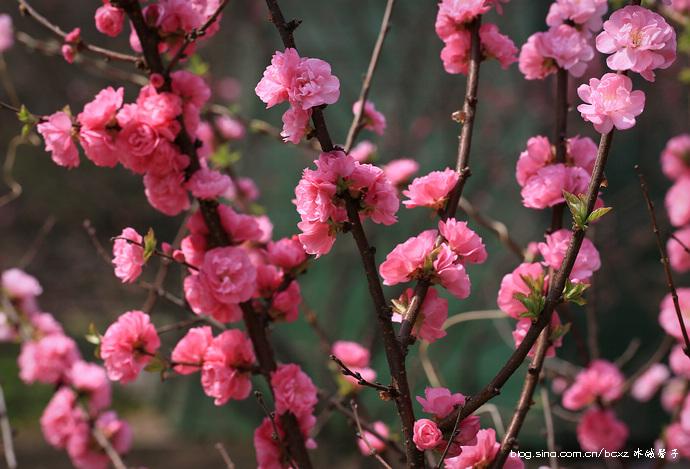 春季来赏花攻略赏花王者_哈尔滨景点\攻略\线之冰城域攻略图片