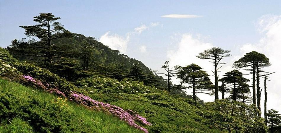 """乘苍山大索道 观""""一山有四季""""风景"""