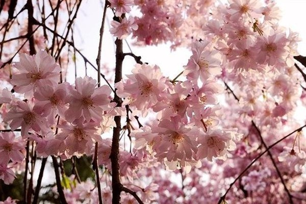 仿真花枝抠图素材
