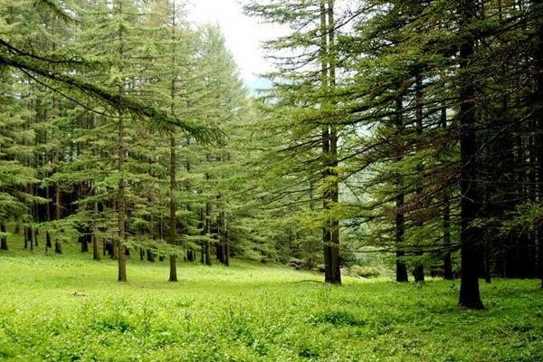 庞泉沟自然保护区