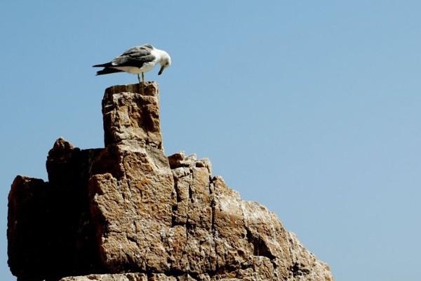 海驴岛风景区,位于山东省荣成市.