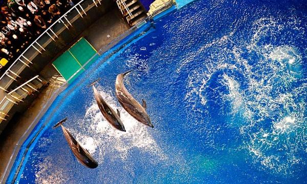 精彩绝伦的海洋动物表演