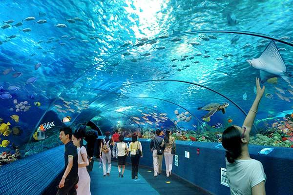 跟爸爸去海底世界看美人鱼