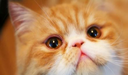 可爱猫咪高兴图片大全可爱
