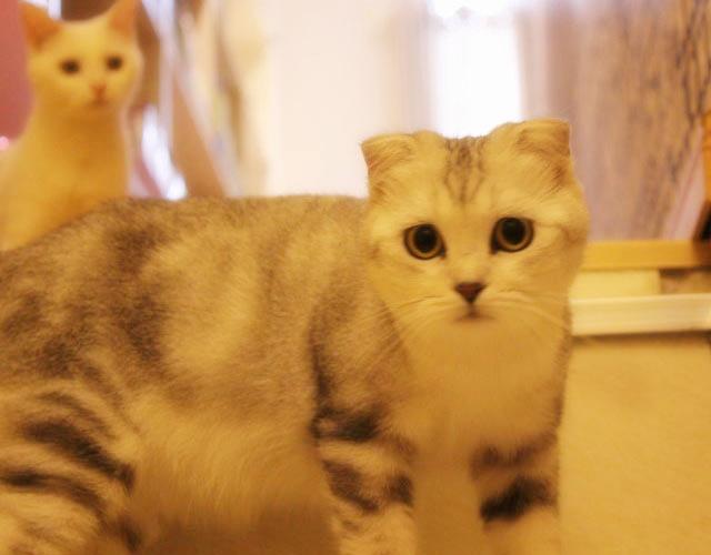 壁纸 动物 猫 猫咪 小猫 桌面 640_500