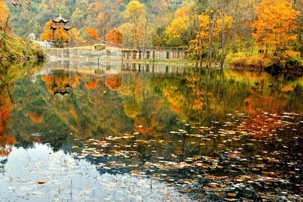周边游  小贴士: 1,地址:四川省雅安市喇叭河自然保护区 2,交通: 成都