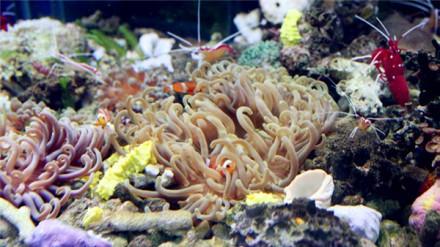 时尚购物  特色:海水缸造景及海水鱼,珊瑚,软体,人工小丑鱼批发零售.