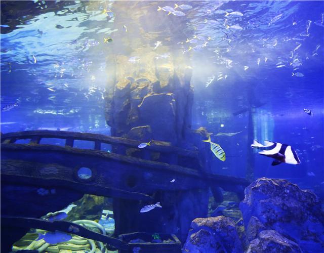 壁纸 海底 海底世界 海洋馆 水族馆 640_500