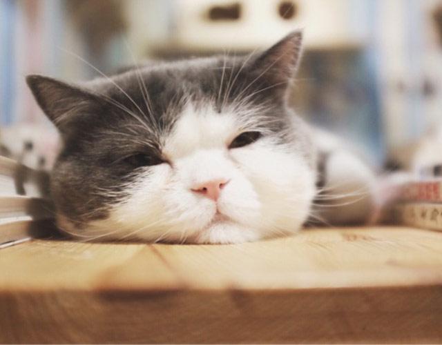 适合爱猫的小伙伴喝咖啡聊天,看书.那么多萌萌的喵星人,治愈力满分!