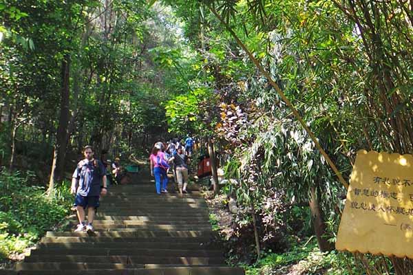 飞越丛林的歌乐山探险家图片