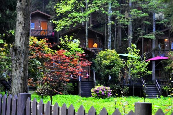 """巧妙运用了土家吊脚楼的建筑原理,将别墅的底层""""架空"""",使树上的小木屋"""
