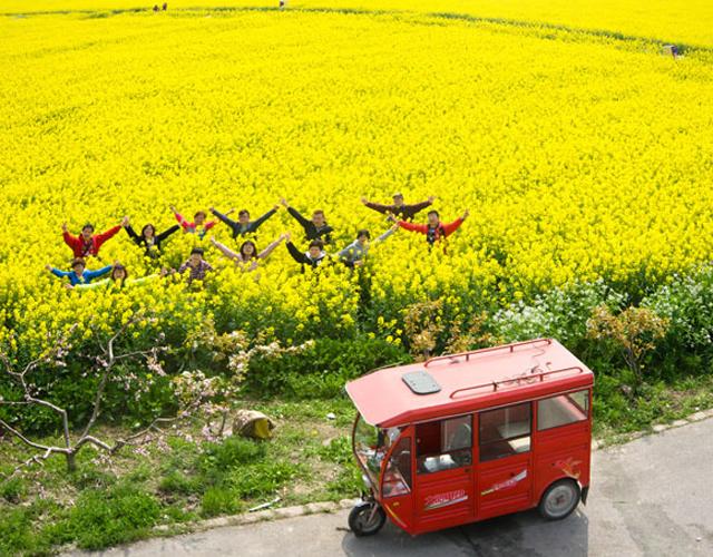 十多个品种的万亩油菜花形成一片金灿灿的花海,在蓝天白云下仿佛金色